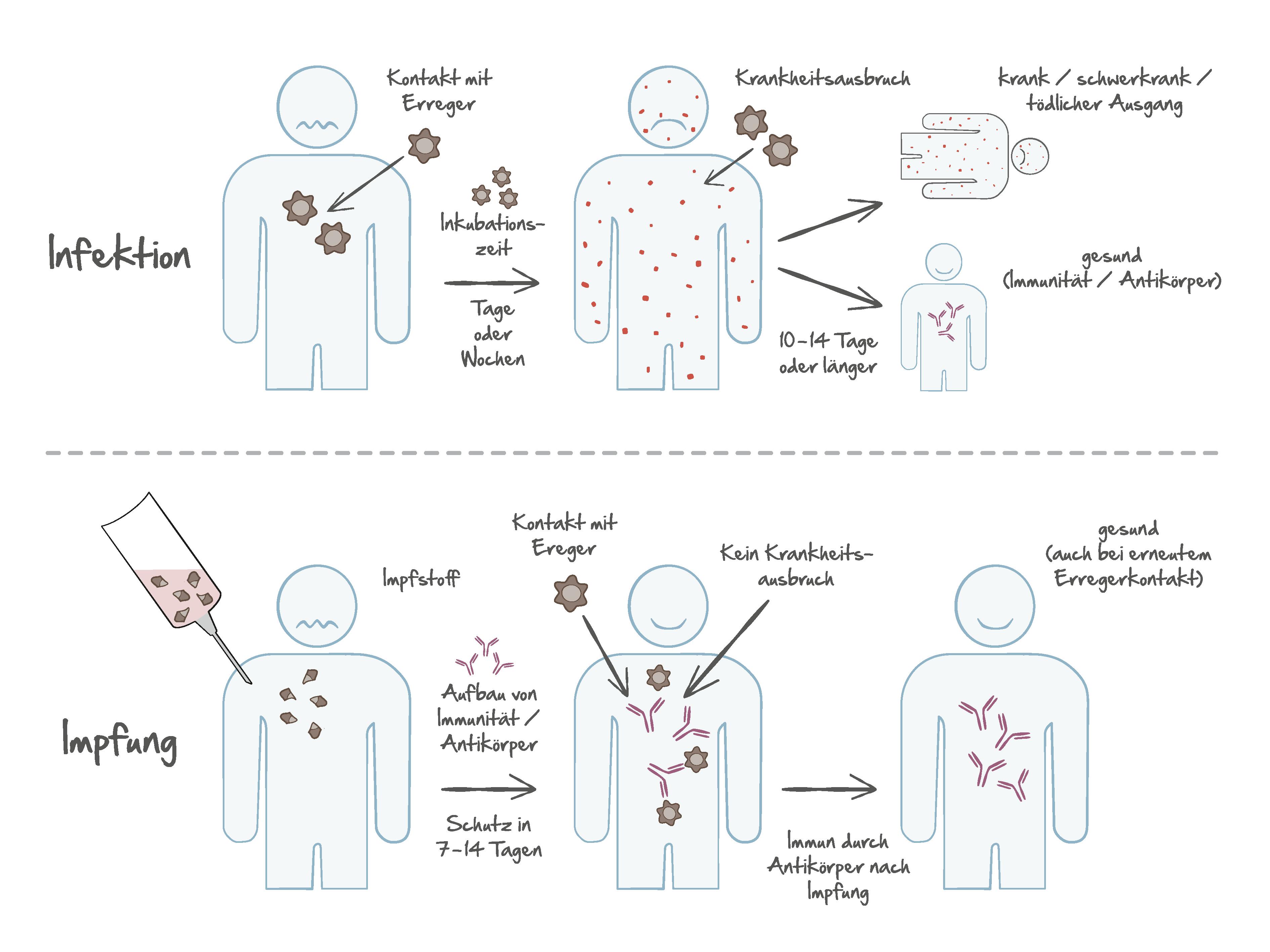 impfzentrum-alserstrasse-spezifische-prophylaxe-tropenmedizin-immunologie-allgemeinmedizin-gelbfieberimpfstelle-wie-wirkt-eine-impfung